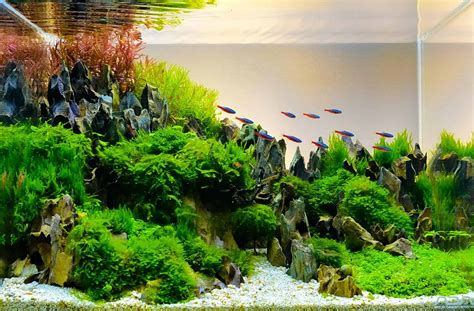 Aquascaping Supplies Beginner's Guide [UPDATED 2019]