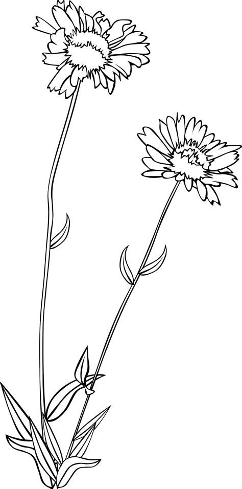 wildflower clipart black and white - Clipground