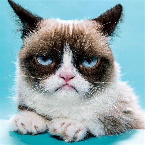 Grumpy Cat Has Made Over $100M in Just Two Years -- NYMag