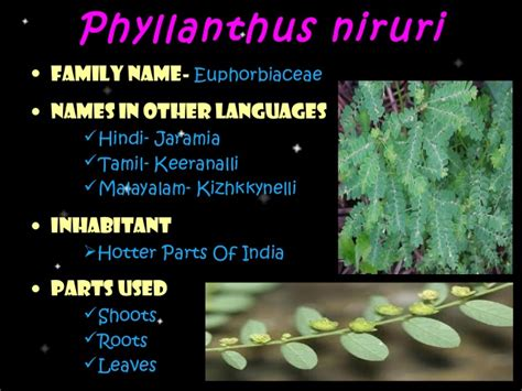 medicinal plants & their uses