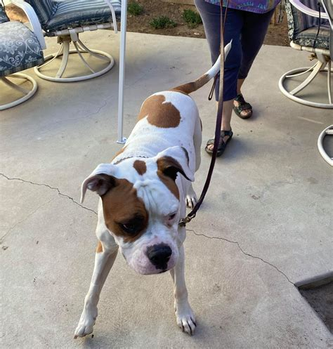 Animal Rescue of Fresno—American Pie   Kings River Life