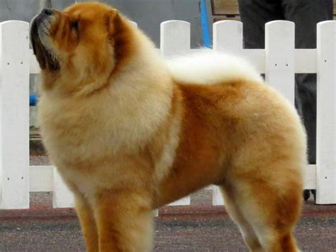 Can You Name These 12 Most Dangerous Dog Breeds? | QuizPug