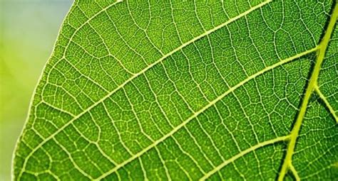 PARTS OF A LEAF - Leaf Parts And Meaning Of Each