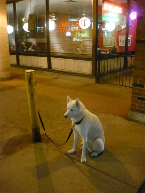 Leaving your dog tied up unattended puts him or her at risk